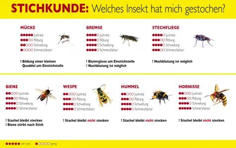 Hausmittel gegen Bienen- und Wespenstiche