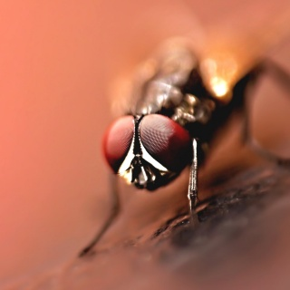Fliegendreckflecken entfernen
