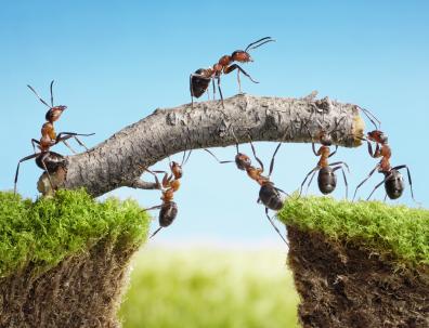 Hausmittel um Ameisen zu bekämpfen und zu entfernen