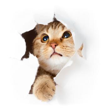 Katzen entwurmen