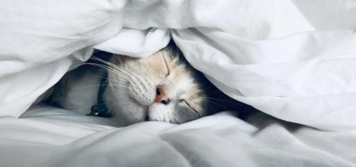 Katzenernährung in der kalten Jahreszeit