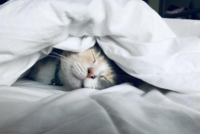Winterspeck oder Winterschlaf - Katzenernährung in der kalten Jahreszeit