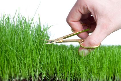 Moos aus dem Rasen entfernen