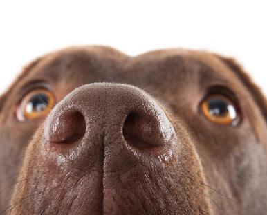 Neue Trends für den Hund im neuen Jahr