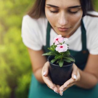 Pflanzenpflege - Worauf Sie achten sollten