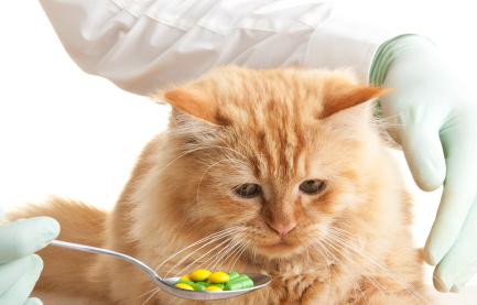 Schüssler Salze an Katzen und Hunde verabreichen