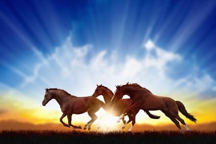 Welches Zusatzfutter braucht ein Pferd im Winter wirklich?