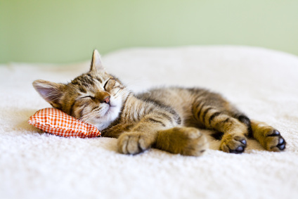 Wie erkenne ich hochwertiges Katzenfutter?