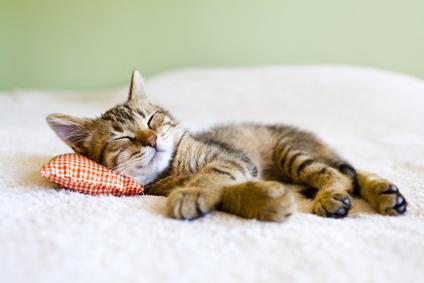 Woran erkenne ich hochwertiges Katzenfutter?